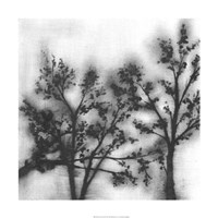 Silvery Trees II Framed Print