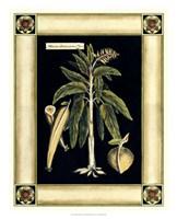 Paradise Palm VI Fine Art Print