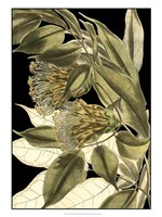 """Tranquil Tropical Leaves VI by Vision Studio - 18"""" x 24"""" - $40.49"""