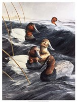 """The Lost Decoy by Kevin Daniel - 19"""" x 25"""" - $34.49"""