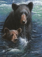 Bearly Swimming Fine Art Print