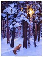 "Cold Fire by Julie Chapman - 19"" x 25"""