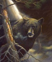 """10"""" x 12"""" Bear Pictures"""