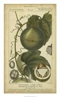 Exotic Botanica I Fine Art Print