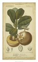 Exotic Botanica II Fine Art Print