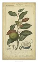 Exotic Botanica III Fine Art Print