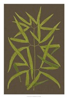 "Ferns on Linen I by Vision Studio - 18"" x 26"" - $31.49"
