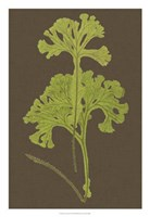 "Ferns on Linen II by Vision Studio - 18"" x 26"" - $31.49"