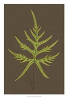 "Ferns on Linen IV by Vision Studio - 18"" x 26"" - $31.49"
