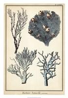 """Coral Species II by Vision Studio - 18"""" x 26"""""""