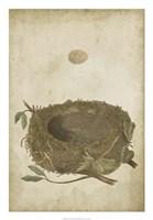 "Bird's Nest Study II by Vision Studio - 18"" x 26"""