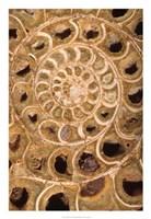 """Ammonite I by Vision Studio - 18"""" x 26"""""""