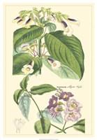 Botanical II Fine Art Print