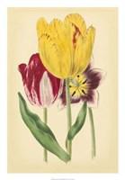 "Tulip Array I by Vision Studio - 18"" x 26"""