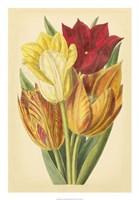"Tulip Array II by Vision Studio - 18"" x 26"""