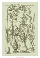 """Garden of Flora I by Vision Studio - 18"""" x 26"""" - $31.49"""