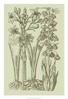 "Garden of Flora II by Vision Studio - 18"" x 26"" - $31.49"