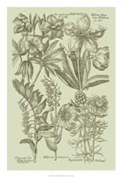 """Garden of Flora III by Vision Studio - 18"""" x 26"""" - $31.49"""