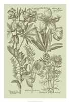 "Garden of Flora III by Vision Studio - 18"" x 26"", FulcrumGallery.com brand"