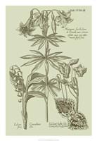 "Garden of Flora IV by Vision Studio - 18"" x 26"" - $31.49"