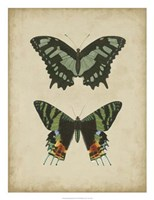 """Antique Butterfly Pair II by Vision Studio - 20"""" x 26"""""""