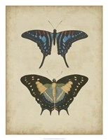 """Antique Butterfly Pair III by Vision Studio - 20"""" x 26"""""""