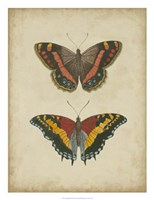 """Antique Butterfly Pair IV by Vision Studio - 20"""" x 26"""""""