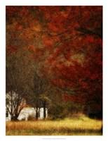 Beyond October's Maple Fine Art Print