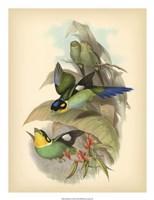 """Birds of the Tropics I by John Gould - 20"""" x 26"""""""