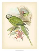 "Birds of the Tropics II by John Gould - 20"" x 26"""