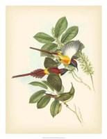 Birds of the Tropics III Fine Art Print