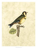 """Birds I by John Selby - 20"""" x 26"""""""