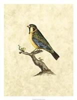 """Birds II by John Selby - 20"""" x 26"""" - $43.99"""