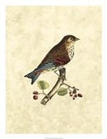 """Birds III by John Selby - 20"""" x 26"""" - $43.99"""