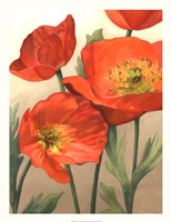 "Poppy Love I by Megan Meagher - 20"" x 26"""