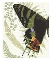 Butterfly Symmetry I Framed Print