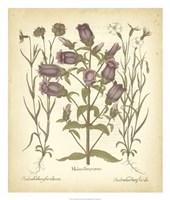 Tinted Besler Botanical II Fine Art Print