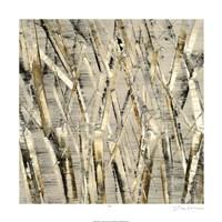Birches V Fine Art Print