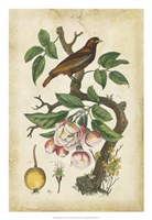 Antique Bird in Nature I Fine Art Print