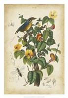 Antique Bird in Nature III Fine Art Print