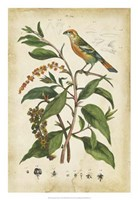 Antique Bird in Nature IV Fine Art Print