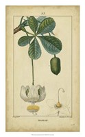 Vintage Turpin Botanical II Fine Art Print