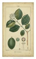 Vintage Turpin Botanical III Fine Art Print