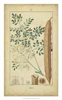 Vintage Turpin Botanical V Fine Art Print