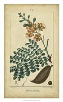 Vintage Turpin Botanical VI Fine Art Print
