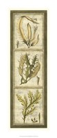 "Exotic Seaweed Panel I by Nancy Slocum - 11"" x 28"""