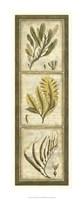 "Exotic Seaweed Panel II by Nancy Slocum - 11"" x 28"""