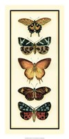 """14"""" x 28"""" Butterfly Pictures"""