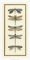 """14"""" x 28"""" Dragonfly Pictures"""