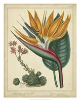 Golden Bird of Paradise Fine Art Print